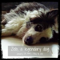 foto friday 12 {zeb}