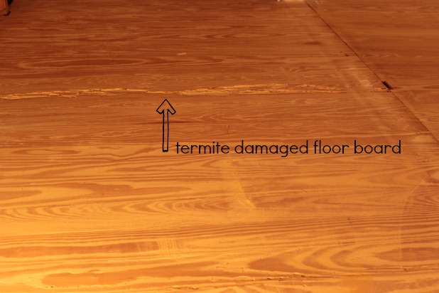 Hardwood Floor Restoration   Termite Damage Repair