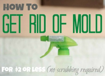 how-to-get-rid-of-mold-slide