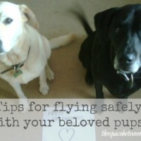 flying with a dog {or 2}