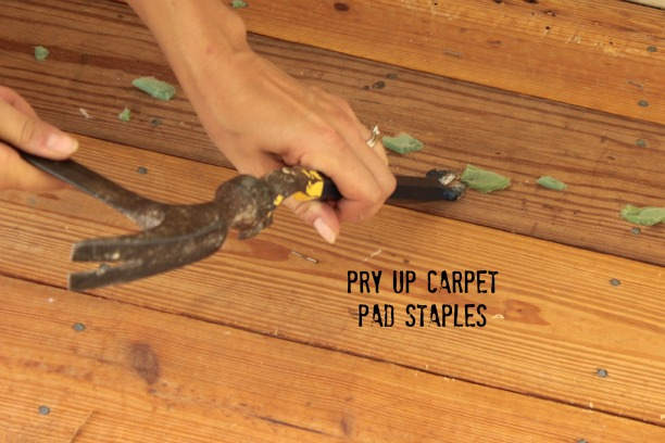 remove carpet pad staples with a pry bar