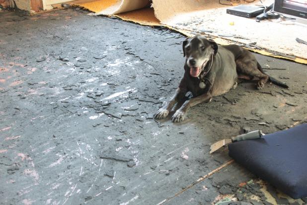 Preparing For Hardwood Floor Restoration Open Letter To